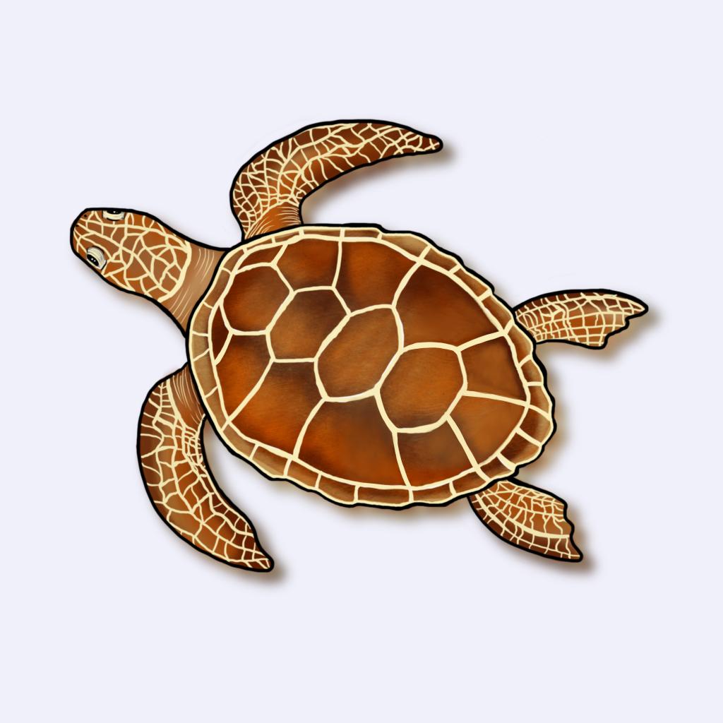 Ilustração da tartaruga-cabeçuda (Caretta caretta)