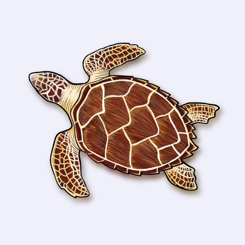 Ilustração da tartaruga-de-pente (Eretmochelys imbricata)